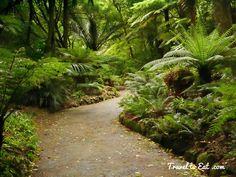 Image result for nz native garden