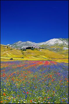 Nature's Garden Blooms in Spring--Strepitoso! Castelluccio ~ field of poppies, Umbria, Italy by zio.paperino