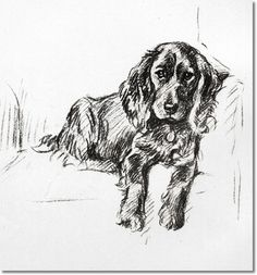 Lucy Dawson - - Springer Spaniel by Lucy Dawson Painting Dog Pencil Drawing, Pencil Drawings, Spaniel Puppies, Dogs And Puppies, Doggies, English Spaniel, Cockerspaniel, Animal Drawings, Dog Drawings