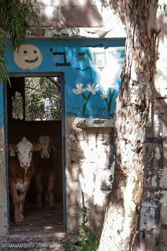 Barn in the Golan Heights . Israel
