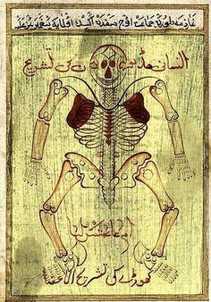 """Anatomía del año 1020 según el médico persa Ibn Sina (Avicena) del """"El Canon de medicina"""""""