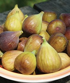 Fig, Letizia - Specialty Fruits at Burpee.com A family heirloom, named after plantsman Steve Castorani's mother Letizia, whose parents brought the fig all the way from Italy. Since the 1930s, over many years, the plant has grown to a multi-stemmed tree, dense with beautiful, neatly lobed green leaves. An easy-to-grow ornamental bush, with large crops of fantastic brown fruits. Enjoy the summer harvest of luscious flavor from the old home country.