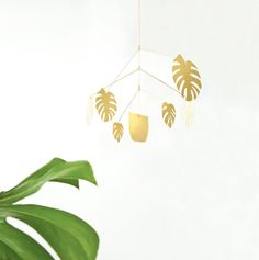 The leaves of Monstera Deliciosa (aka split leaf philodendron or ) are beloved for their graphical silhouette. Portland designer Natalie Joy references their swiss cheese leaves in golden mobile form. Philodendron Monstera, Monstera Deliciosa, April 4th, Houseplants, Screen Printing, Plant Leaves, Design Inspiration, Design Ideas, Home Decor