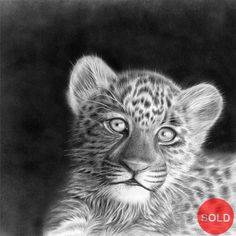 African Wildlife Pencil art