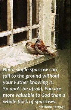 Not a single sparrow can fall to the ground without your Father knowing it. So don't be afraid, you are more valuable to God than a whole flock of sparrows. [Matthew 10:29-31]