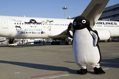 Penguin Jet by JAL ( Japan Airlines ) Service than January 20 start.