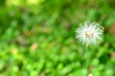 lets make a wish