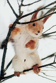 Cute squirrel!