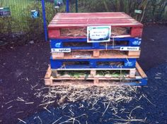 Loughton have used different coloured palllets to make their bug hotel