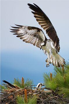 139 Best Birds We Look For Images Beautiful Birds Exotic Birds