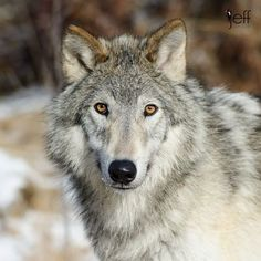 Staring into wild eyes.