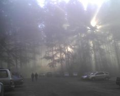 Nature Aesthetic, Forest Fairy, All Nature, Dark Forest, Foggy Forest, Photo Dump, Faeries, Pretty Pictures, Aesthetic Pictures