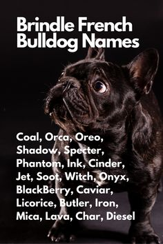 When you are anxiously waiting for your French Bulldog to join you, you may be thinking about French Bulldog names...Coal, Orca, Oreo, Shadow, Specter, Phantom, Ink, Cinder, Jet, Soot, Witch, Onyx, BlackBerry, Caviar, Licorice, Butler, Iron, Mica, Lava, Char, Diesel Brindle French Bulldog, French Bulldog Names, Black French Bulldogs, French Bulldog Puppies, Cinder, Caviar, Daily Inspiration, Butler, Blackberry