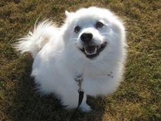 IMG_2464 teaching a dog to take treats gently