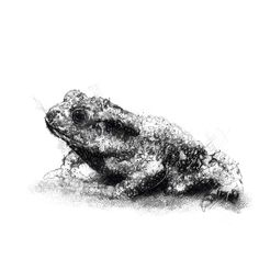 Fine Art Drawing, Art Drawings, Sketch A Day, Shop Art, Toad, Surface Design, Uk Shop, Giclee Print, How To Draw Hands