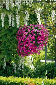 This time of the year, we may all need a little help keeping our plants and pots looking pretty!!