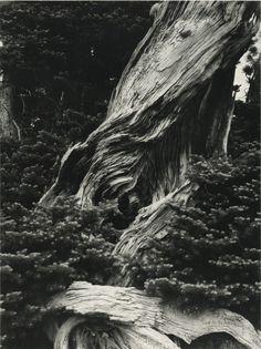 Minor White, Copper Creek Oregon, 1941