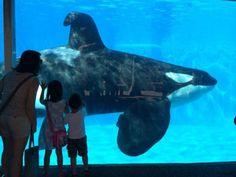 """""""O GRITO DO BICHO"""": Urgente: Petição PETA para o Sea World parar de ex..."""