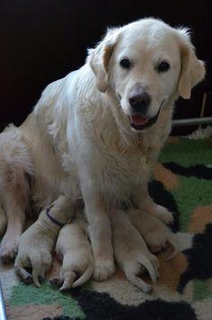 Kyra met pups