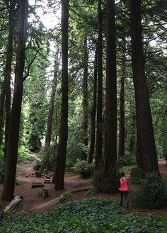 Jogging through Golden Gate Park in San Francisco!