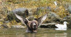 Comedy Wildlife Photography Awards 2016 Finalists   Bored Panda