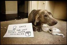 dog shaming reminds me of hunter. I have to do this with hunter! ;)