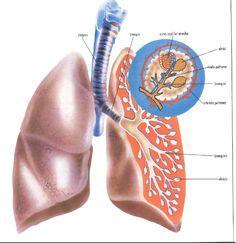 Curar la Bronquitis Remedios Caseros (Salud y Bienestar para Todos)