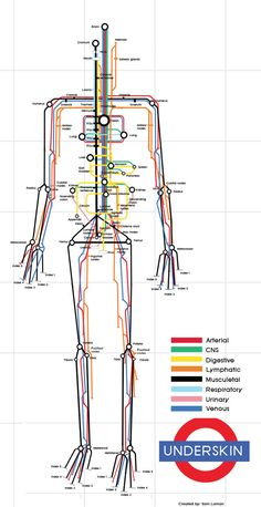 THE HUMAN SUBWAY MAP  Underskin  is an infographic that traces the routes of eight different systems within the body (Digestive, Respiratory, Arterial, etc.), and highlights the major connection points