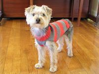 easy dog sweater with great diagrams and excellent instructions