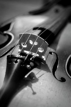 I love the sound of violins all playing as one. It can make me laugh, cry, and move me, all at once. It brings back memories and creates new ones.