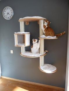 Cat wall furniture