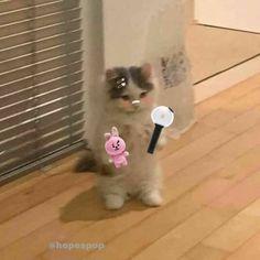 Cute Animal Memes, Cute Memes, Cute Animals, Artsy Wallpaper Iphone, Cute Cats, Funny Cats, Pink Movies, Cat Profile, Stupid Cat