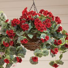 Artificial Geranium Hanging Bush - Zoom - Zoom