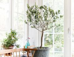 """The """"Next Big Thing"""" Tree Taking Over the Design World ("""