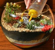 Caring for a terrarium of succulents step by step Succulent Gardening, Cacti And Succulents, Planting Succulents, Container Gardening, Planting Flowers, Watering Succulents, Cactus Terrarium, Water Terrarium, Terrarium Ideas