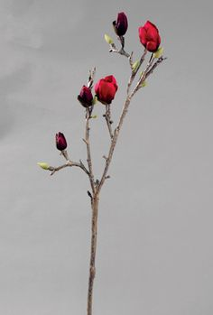 Magnolia (9501)