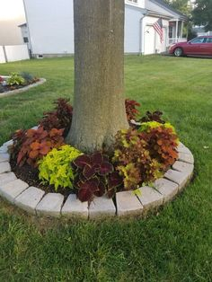 Coleus add 'pop' of color to the house. Coleus add 'pop' of color to the house. Front Yard Garden Design, Front Garden Landscape, Garden Yard Ideas, Lawn And Garden, Landscape Design, Small Front Yard Flower Garden Ideas, Front Yard Tree Ideas, Front Porch, Landscaping Around Trees