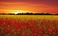 Gün batımı ve çiçek bahçesi