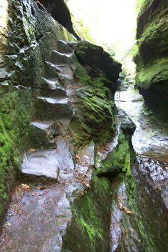 Turkey Run State Park: trails thru - Indiana Trails. That looks scary! It's on my bucket list! Weekend Trips, Weekend Getaways, Day Trips, Places To Travel, Places To See, Travel Things, Turkey Run State Park, Park Trails, Hiking Trails