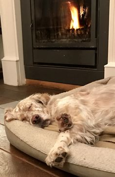 If I pretend I'm asleep they won't know I've been barking all day long