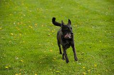 Auf dem Hundeplatz Hund - Freilauf in Meerbusch Bösinghofen am Weilerhof / B See nahe Ossum und Strümp mit Agility Kurs