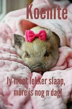 Goeie Nag, Afrikaans, Deep Thoughts, Good Night, Animals, Amanda, Advice, Creative, Quotes