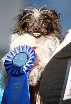 Congrats, P! Blue is definitely your color. WORLD'S UGLIEST DOG
