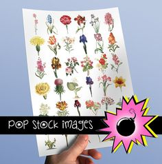 Floral Blossoms & Blooms - INDIVIDUAL Vintage Flower PNG Clipart for Altered Art, Digital Scrapbooking Clip Art- Printable Flower Images