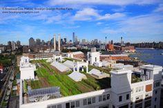Brooklyn Grange Farm, el mayor huerto urbano del mundo en azotea. Imagina todos los tejados como estos de Brooklyn!