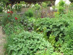 Pěstování zeleniny – nároky na živiny a střídání plodin   Příroda Zahrada
