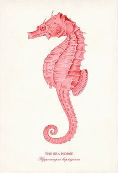 "Shabby Chic Coral Pink Seahorse 13"" x 19"" Art Print Poster From Early 1900s Scientific Illustration"