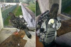 LOOK: Someone Tried to Smuggle a Cell Phone into Prison Using a Pigeon