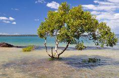 Secret Brisbane - Coochiemudlo Island ... take ferry from Victoria Point jetty.