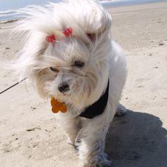 Beach stroll...
